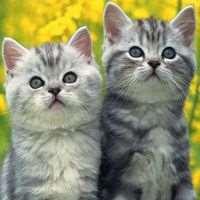 8-котики