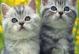 Тканина Дизайн: 8-котики